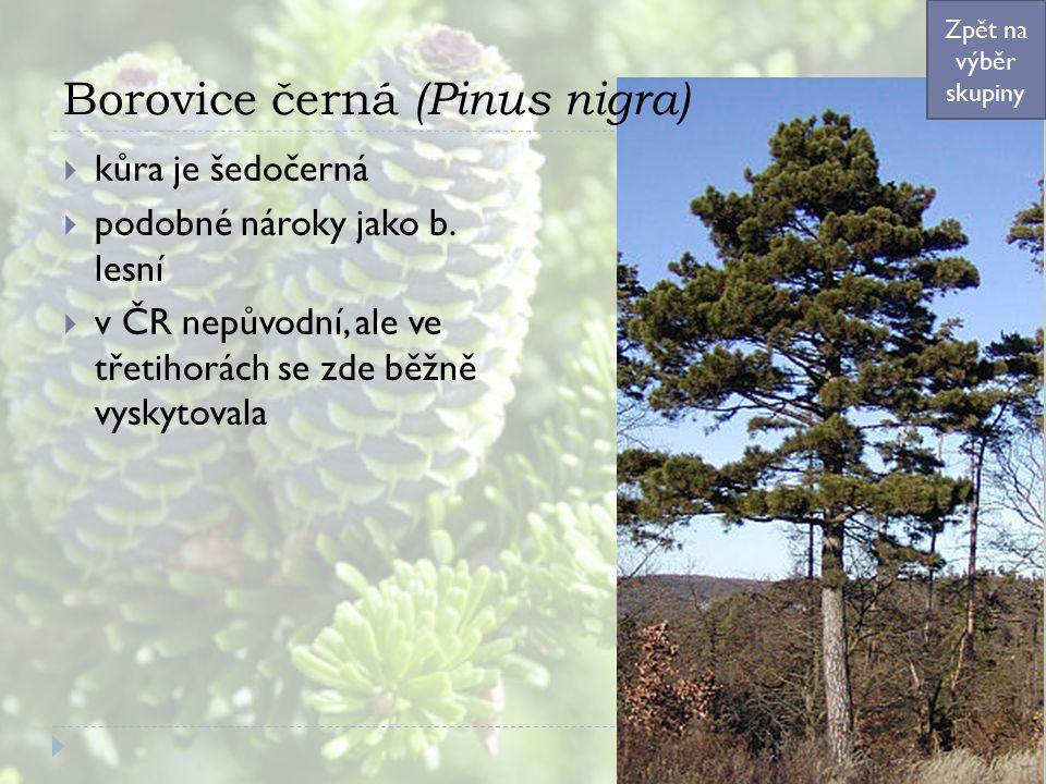Borovice černá (Pinus nigra)  kůra je šedočerná  podobné nároky jako b. lesní  v ČR nepůvodní, ale ve třetihorách se zde běžně vyskytovala Zpět na