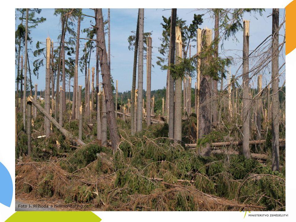 8.4.1 Obnova lesních porostů po kalamitách navazuje na předchozí programové období způsobilé výdaje: odstraňování kalamitami poškozených lesních porostů ve stáří do 40 let určených k rekonstrukci; příprava ploch po kalamitních těžbách před zalesněním (např.