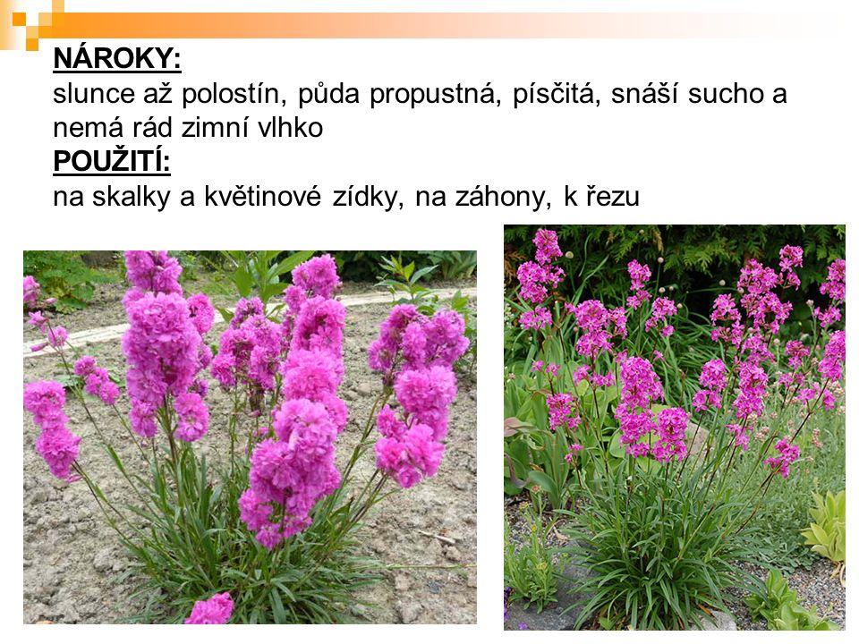 NÁROKY: slunce až polostín, půda propustná, písčitá, snáší sucho a nemá rád zimní vlhko POUŽITÍ: na skalky a květinové zídky, na záhony, k řezu