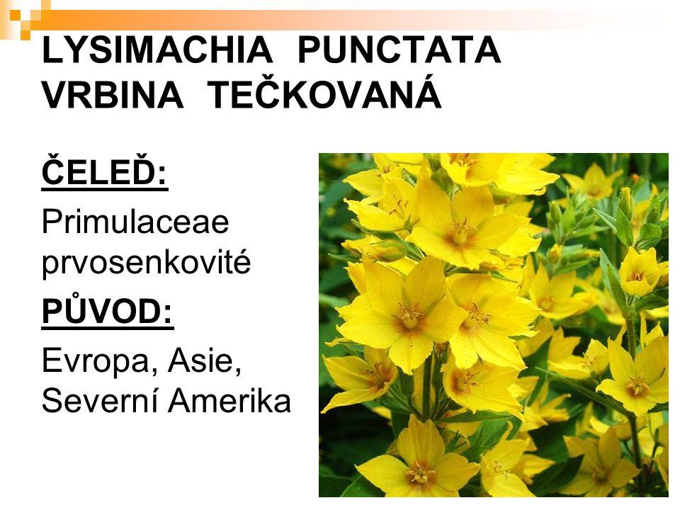 LYSIMACHIA PUNCTATA VRBINA TEČKOVANÁ ČELEĎ: Primulaceae prvosenkovité PŮVOD: Evropa, Asie, Severní Amerika
