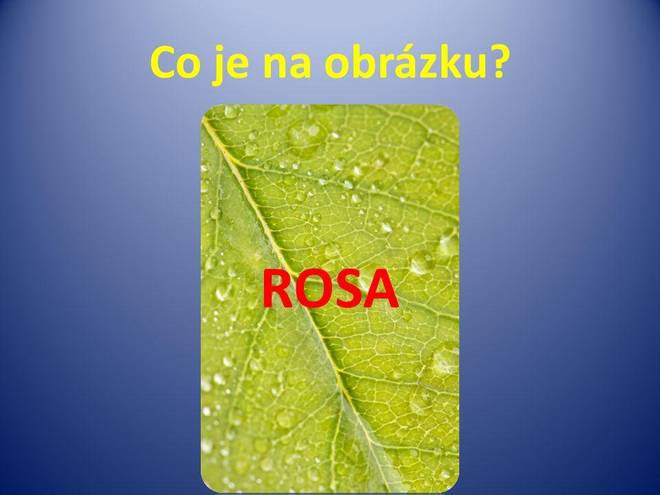 Co je na obrázku ROSA