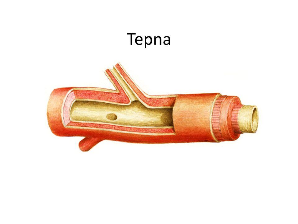 Tepna