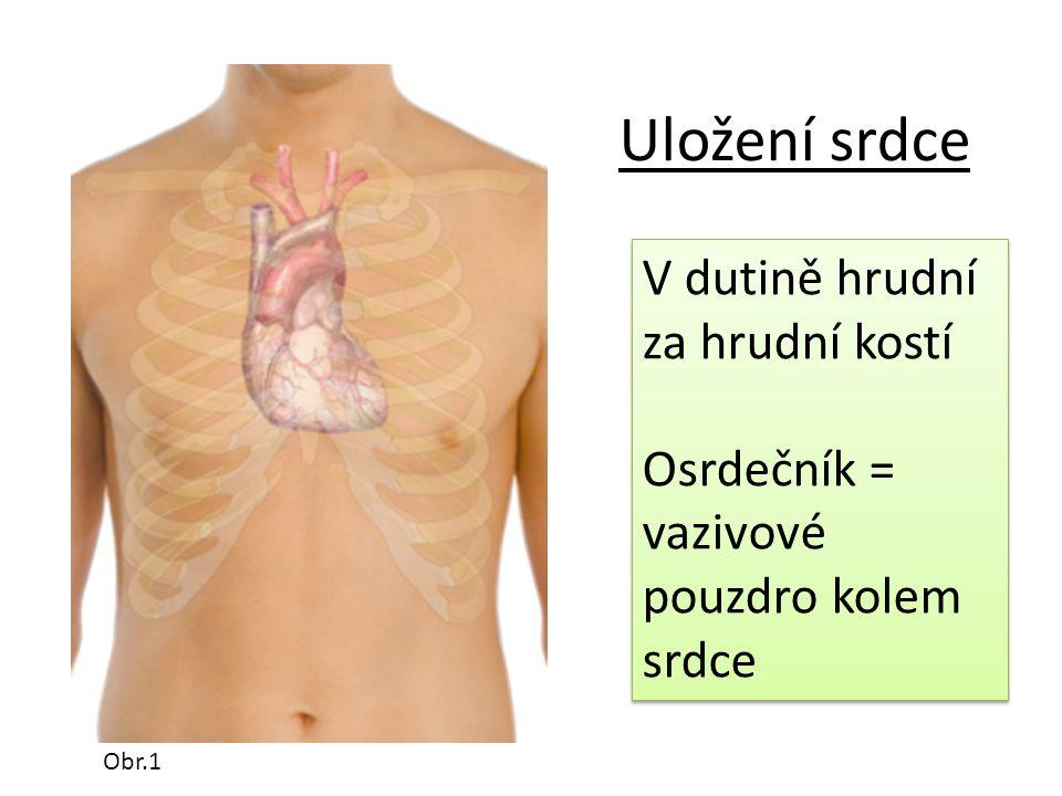 Uložení srdce V dutině hrudní za hrudní kostí Osrdečník = vazivové pouzdro kolem srdce V dutině hrudní za hrudní kostí Osrdečník = vazivové pouzdro kolem srdce Obr.1