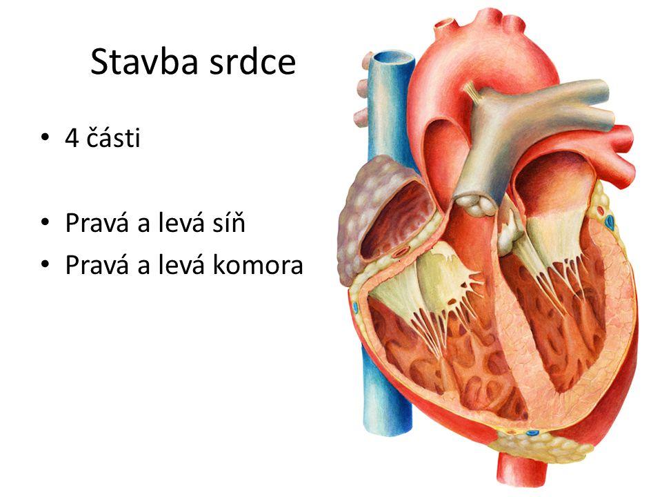 Práce srdce Střídavé smršťování a ochabování svaloviny síní a komor SMRŠŤOVÁNÍ = SYSTOLA OCHABOVÁNÍ = DIASTOLA