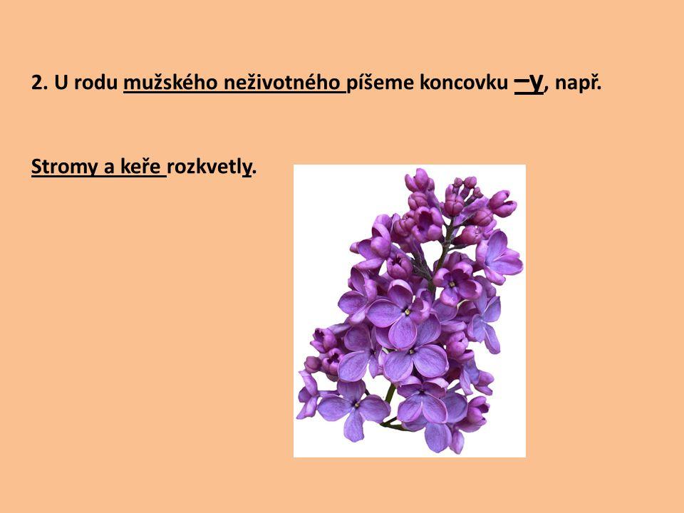 2. U rodu mužského neživotného píšeme koncovku –y, např. Stromy a keře rozkvetly.