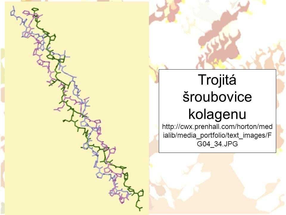 Trojitá šroubovice kolagenu http://cwx.prenhall.com/horton/med ialib/media_portfolio/text_images/F G04_34.JPG