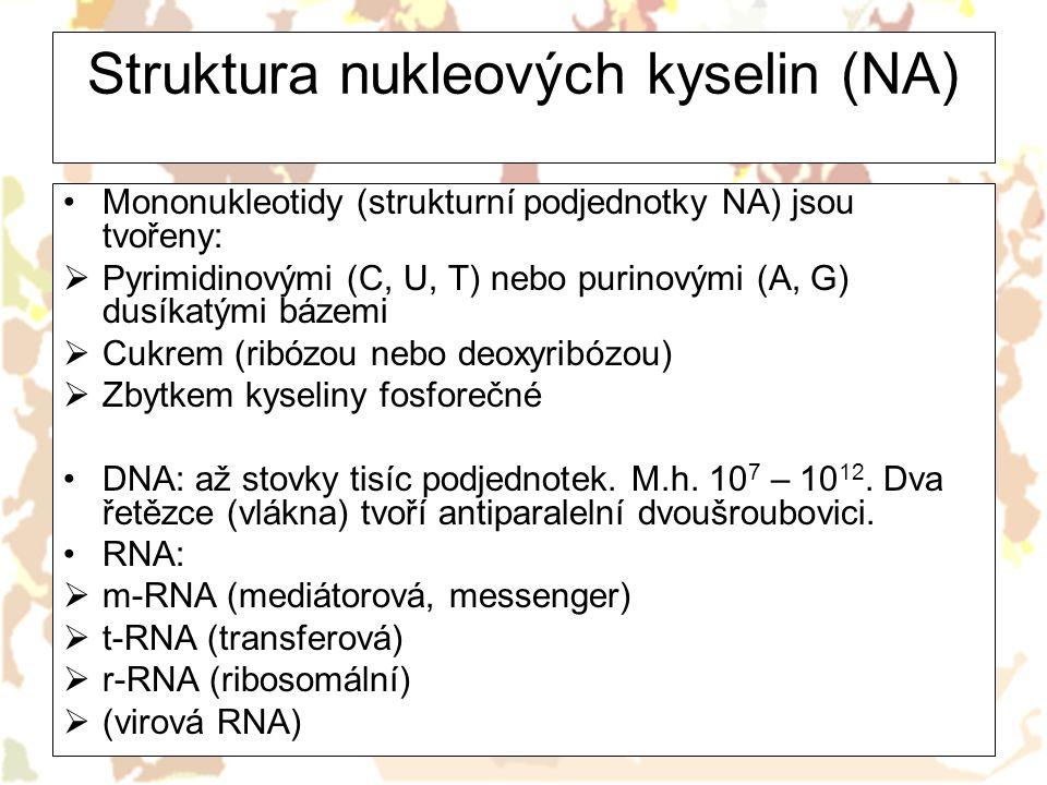 Struktura nukleových kyselin (NA) Mononukleotidy (strukturní podjednotky NA) jsou tvořeny:  Pyrimidinovými (C, U, T) nebo purinovými (A, G) dusíkatým