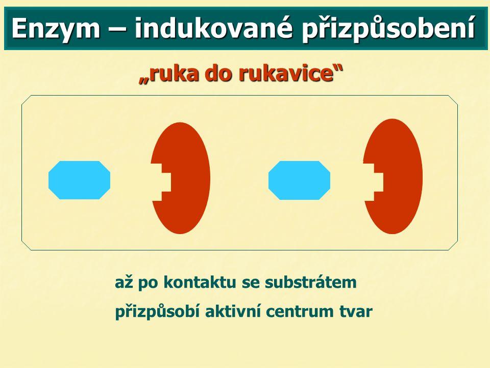 """Enzym – indukované přizpůsobení """"ruka do rukavice až po kontaktu se substrátem přizpůsobí aktivní centrum tvar"""
