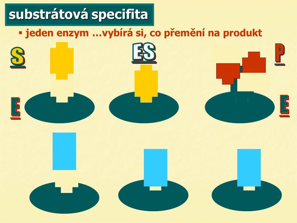 substrátová specifita   jeden enzym …vybírá si, co přemění na produkt