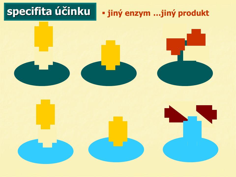 specifita účinku   jiný enzym …jiný produkt