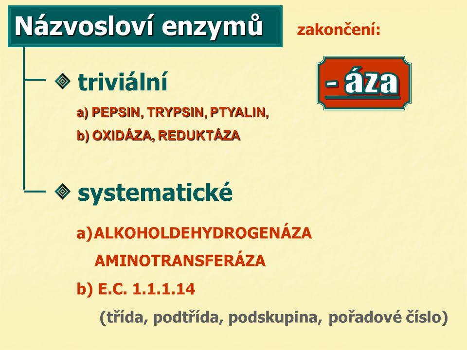 Názvosloví enzymů triviální systematické zakončení: a) PEPSIN, TRYPSIN, PTYALIN, b) OXIDÁZA, REDUKTÁZA a) a)ALKOHOLDEHYDROGENÁZA AMINOTRANSFERÁZA b) E.C.