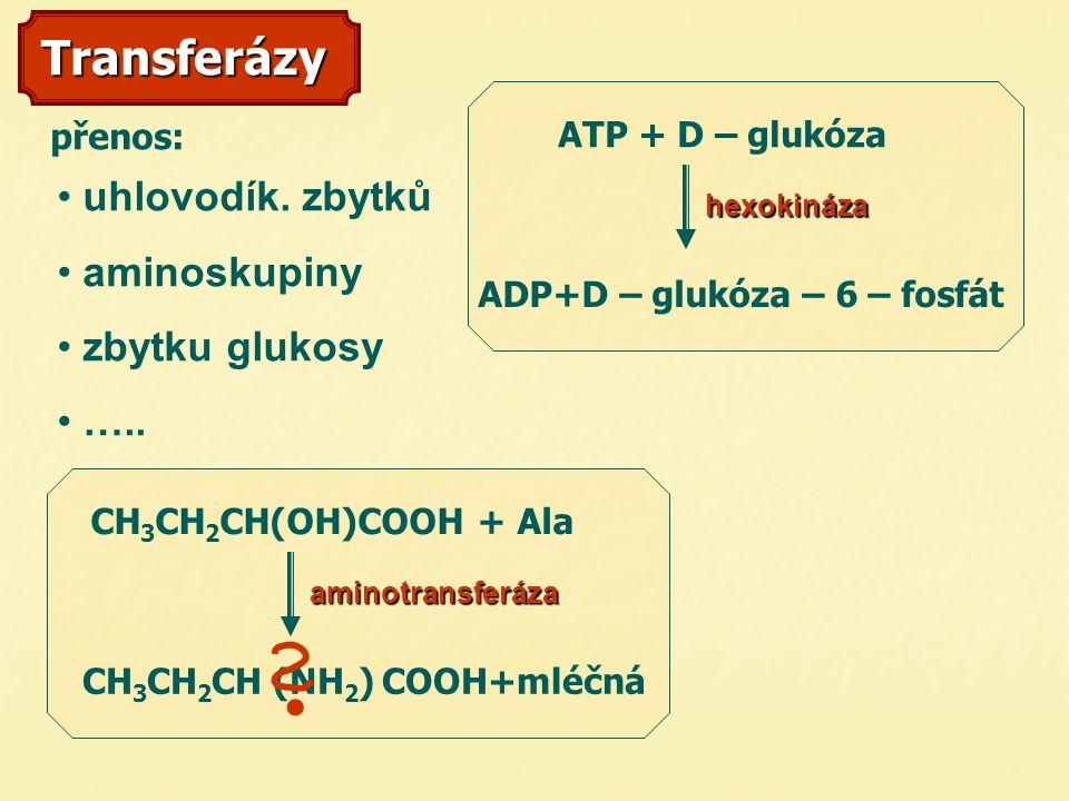 Transferázy uhlovodík. zbytků aminoskupiny zbytku glukosy …..