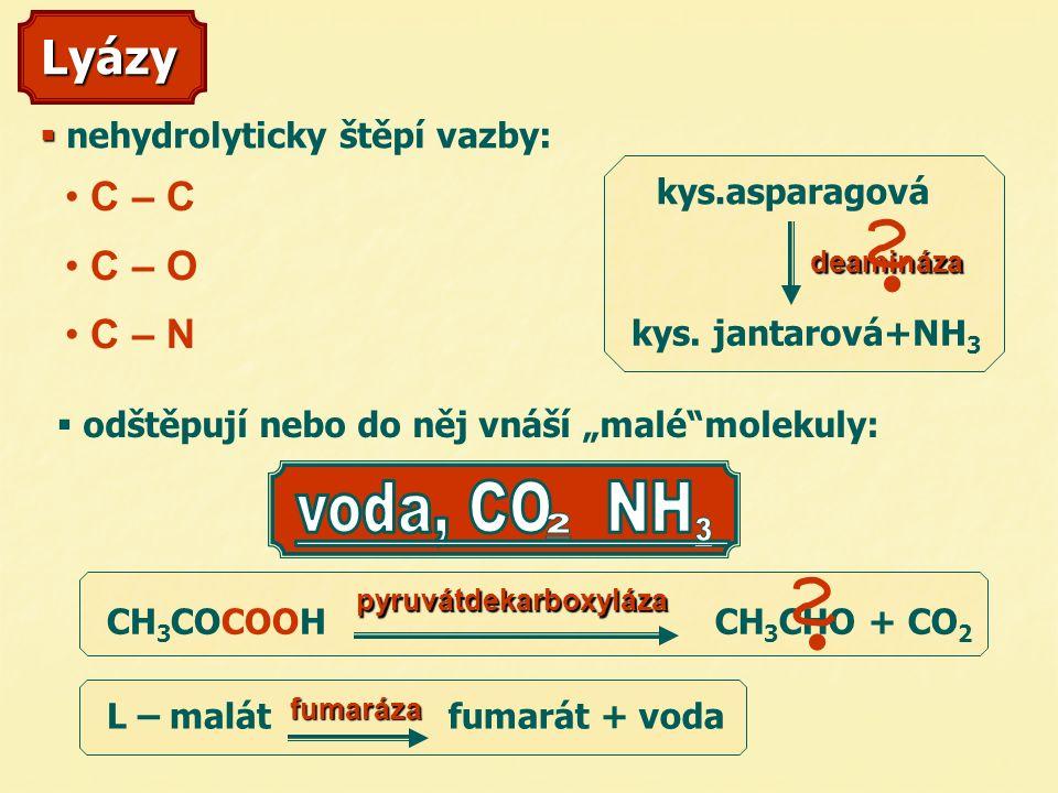 Lyázy C – C C – O C – N   n  nehydrolyticky štěpí vazby: deamináza kys.asparagová kys.