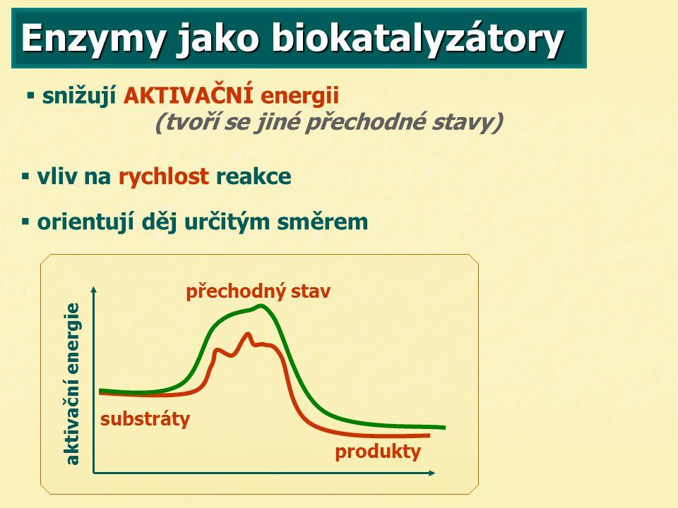 Enzymy jako biokatalyzátory   vliv na rychlost reakce (tvoří se jiné přechodné stavy)   snižují AKTIVAČNÍ energii   orientují děj určitým směrem přechodný stav produkty substráty aktivační energie