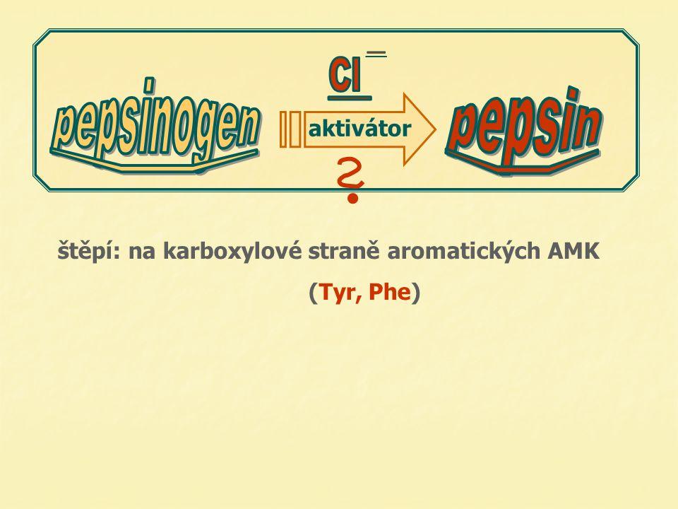 aktivátor štěpí: na karboxylové straně aromatických AMK (Tyr, Phe) 