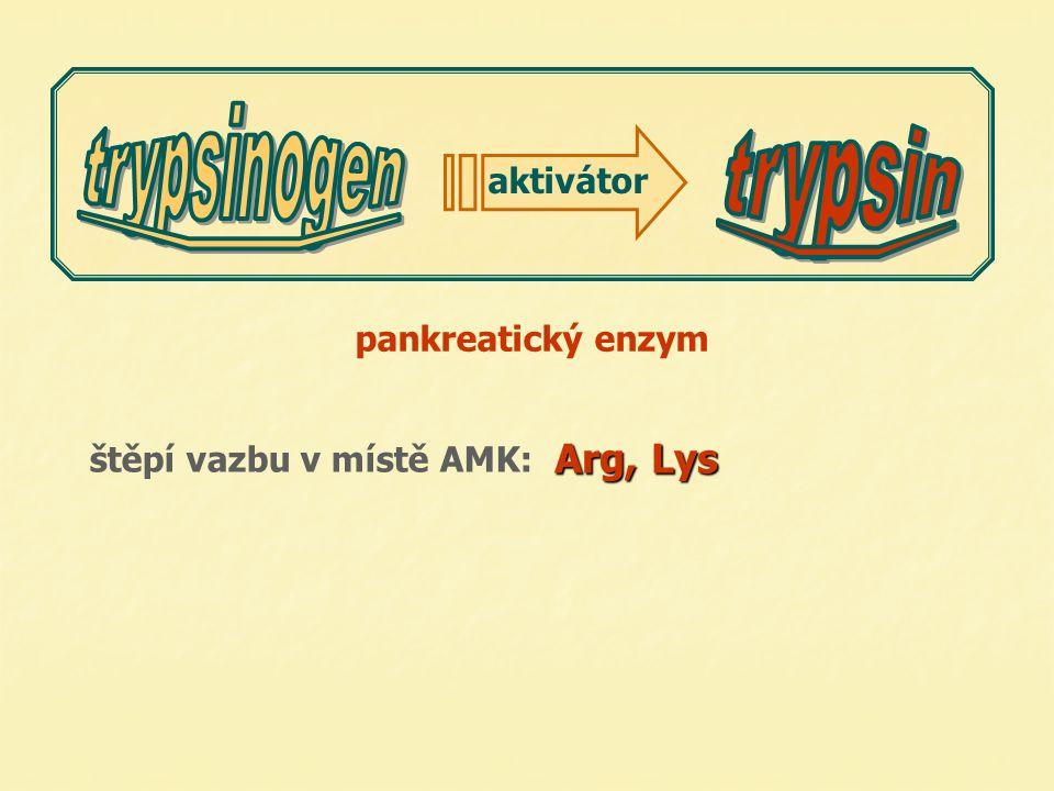 pankreatický enzym Arg, Lys štěpí vazbu v místě AMK: