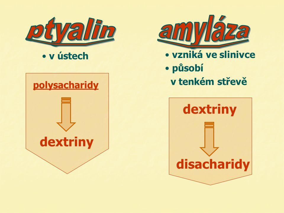 v ústech působí v tenkém střevě polysacharidy dextriny vzniká ve slinivce disacharidy dextriny