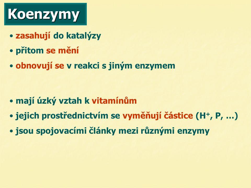 Koenzymy zasahují do katalýzy přitom se mění obnovují se v reakci s jiným enzymem mají úzký vztah k vitamínům jejich prostřednictvím se vyměňují částice (H +, P, …) jsou spojovacími články mezi různými enzymy