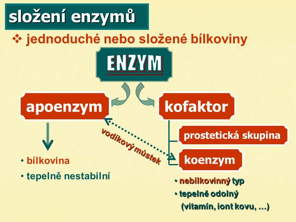složení apoenzymů součástí je: – na něm probíhá vlastní reakce aktivní centrum   zařídí přeměnu na produkt   prostorové utvoření peptidického řetězce   má určitý geometrický tvar   odpovídá tvarem substrátu   malá část enzymu   váže na sebe substrát (E+S)