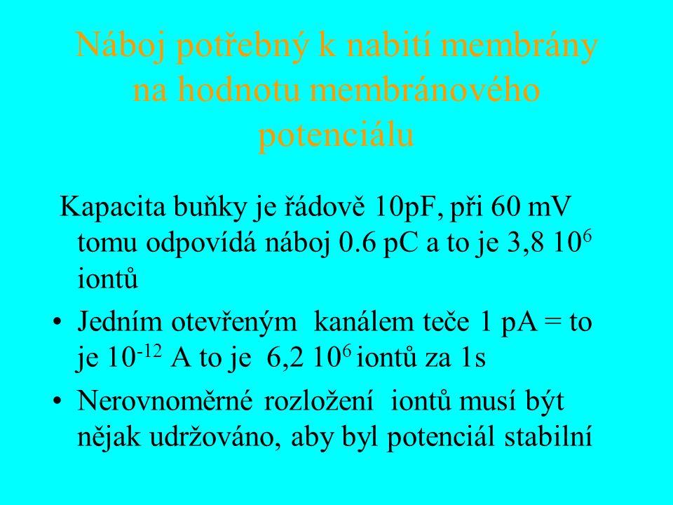 Náboj potřebný k nabití membrány na hodnotu membránového potenciálu Kapacita buňky je řádově 10pF, při 60 mV tomu odpovídá náboj 0.6 pC a to je 3,8 10 6 iontů Jedním otevřeným kanálem teče 1 pA = to je 10 -12 A to je 6,2 10 6 iontů za 1s Nerovnoměrné rozložení iontů musí být nějak udržováno, aby byl potenciál stabilní