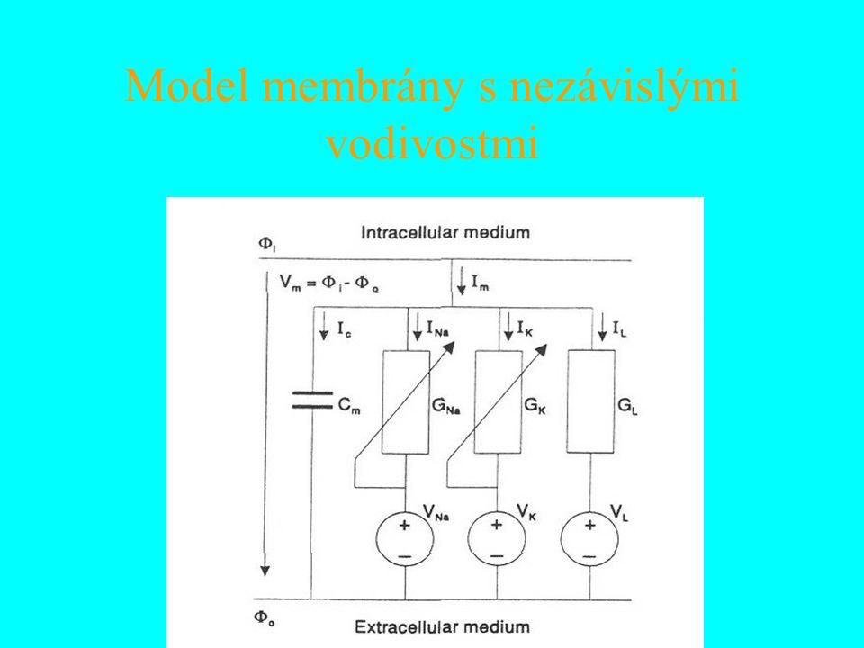 Model membrány s nezávislými vodivostmi