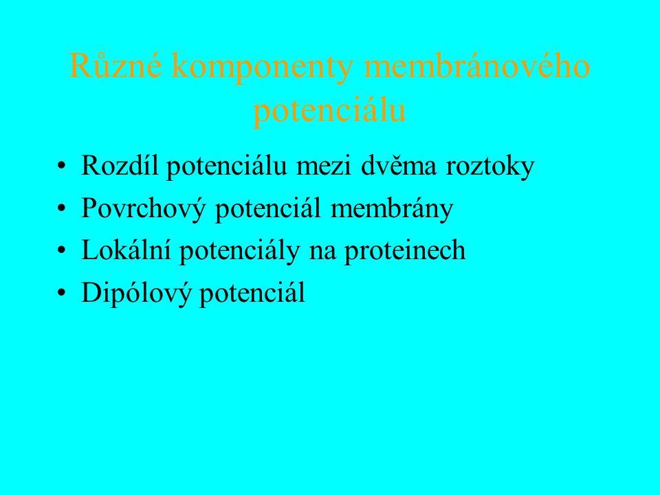 Různé komponenty membránového potenciálu Rozdíl potenciálu mezi dvěma roztoky Povrchový potenciál membrány Lokální potenciály na proteinech Dipólový potenciál