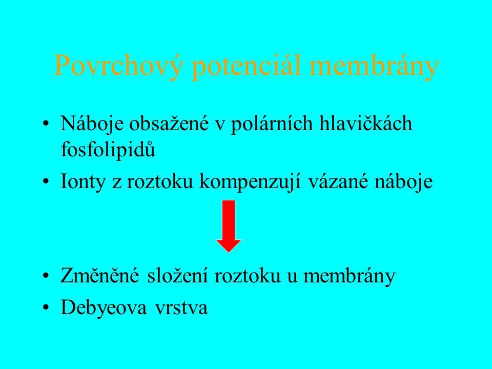 Povrchový potenciál membrány Náboje obsažené v polárních hlavičkách fosfolipidů Ionty z roztoku kompenzují vázané náboje Změněné složení roztoku u mem