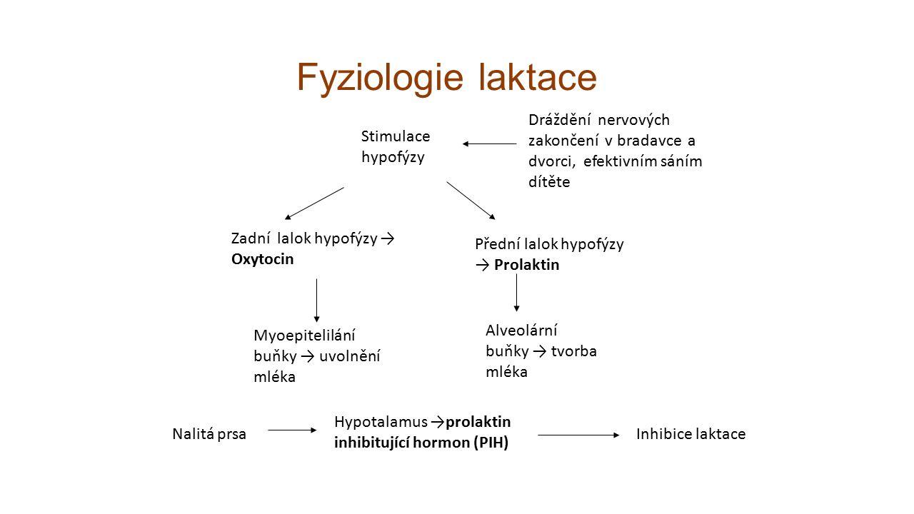 Fyziologie laktace Dráždění nervových zakončení v bradavce a dvorci, efektivním sáním dítěte Stimulace hypofýzy Zadní lalok hypofýzy → Oxytocin Myoepitelilání buňky → uvolnění mléka Přední lalok hypofýzy → Prolaktin Alveolární buňky → tvorba mléka Nalitá prsa Hypotalamus →prolaktin inhibitující hormon (PIH) Inhibice laktace