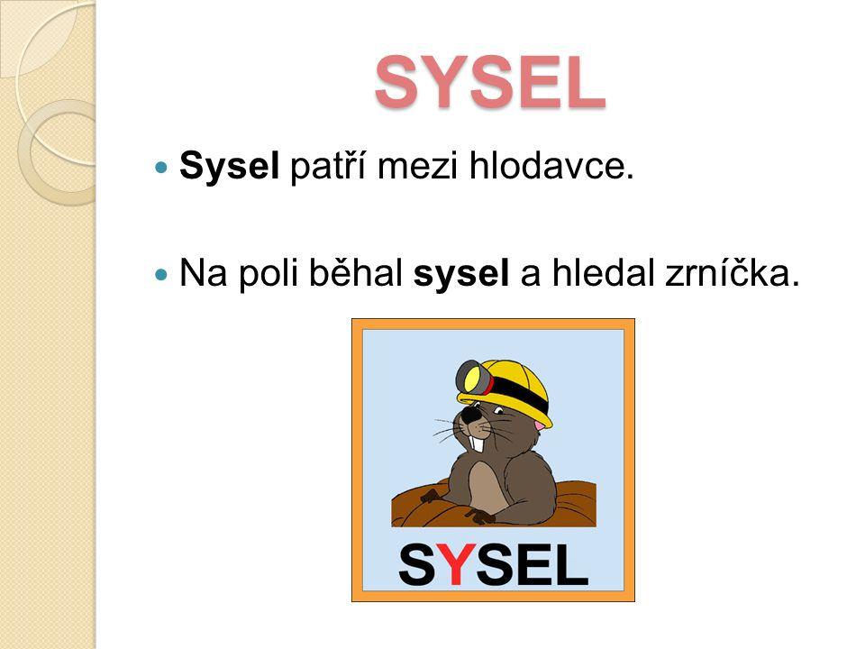 SYSEL Sysel patří mezi hlodavce. Na poli běhal sysel a hledal zrníčka.