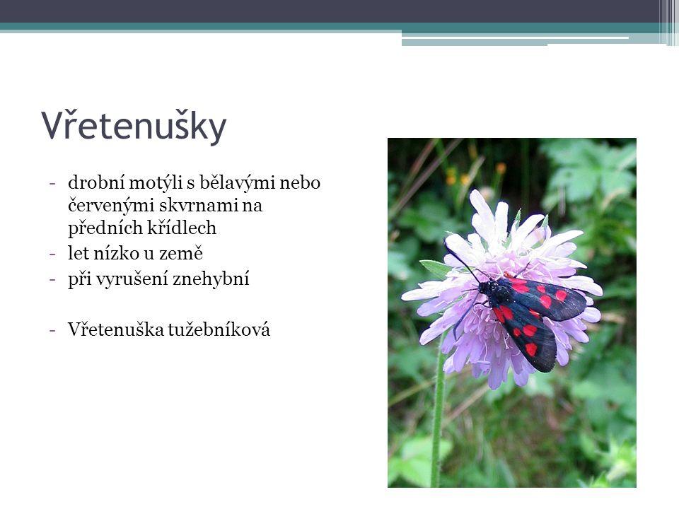 Vřetenušky -drobní motýli s bělavými nebo červenými skvrnami na předních křídlech -let nízko u země -při vyrušení znehybní -Vřetenuška tužebníková