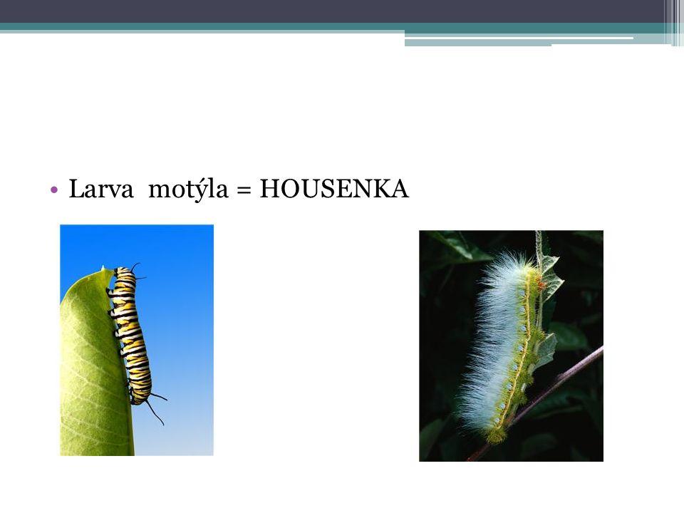 Larva motýla = HOUSENKA