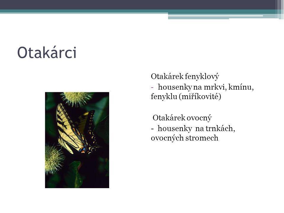 Otakárci Otakárek fenyklový - housenky na mrkvi, kmínu, fenyklu (miříkovité) Otakárek ovocný - housenky na trnkách, ovocných stromech