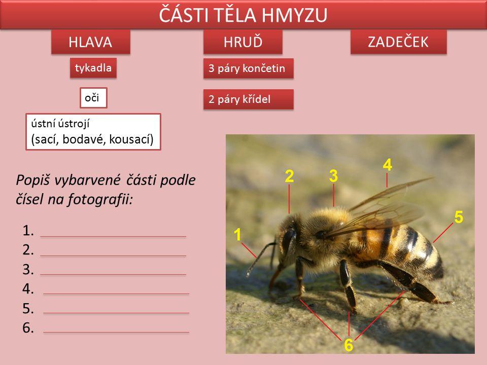 Hmyz má tato vnitřní ústrojí: oběhové dýchací (vzdušnice) trávicí vylučovací rozmnožovací nervové smysly Vypadají takto: