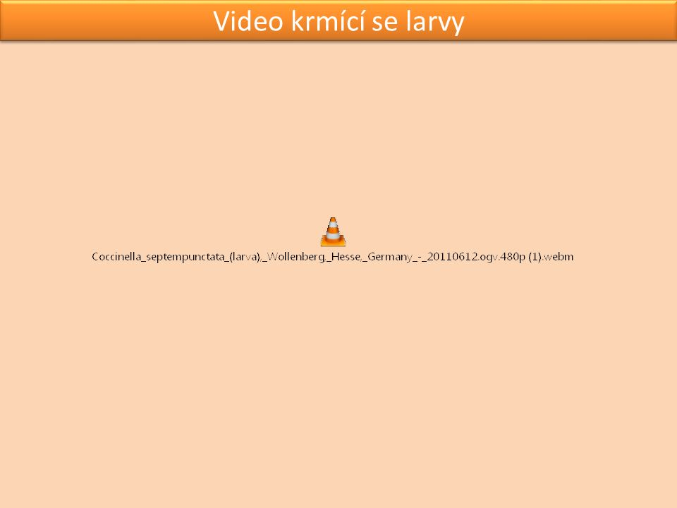 Video krmící se larvy