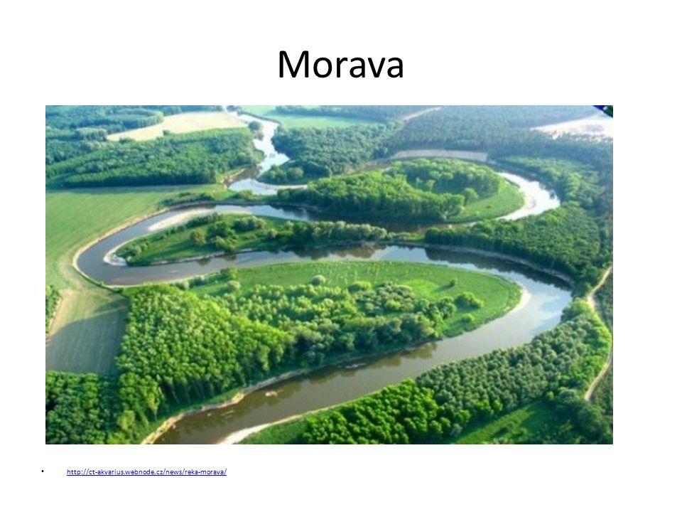 Morava http://ct-akvarius.webnode.cz/news/reka-morava/