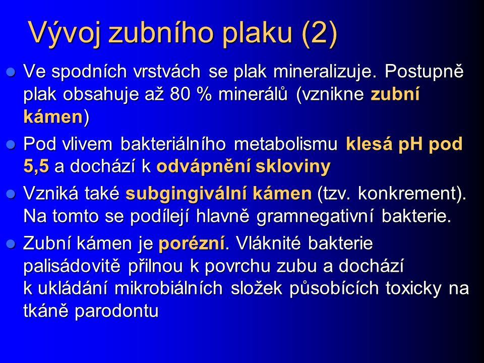 Vývoj zubního plaku (2) Ve spodních vrstvách se plak mineralizuje.