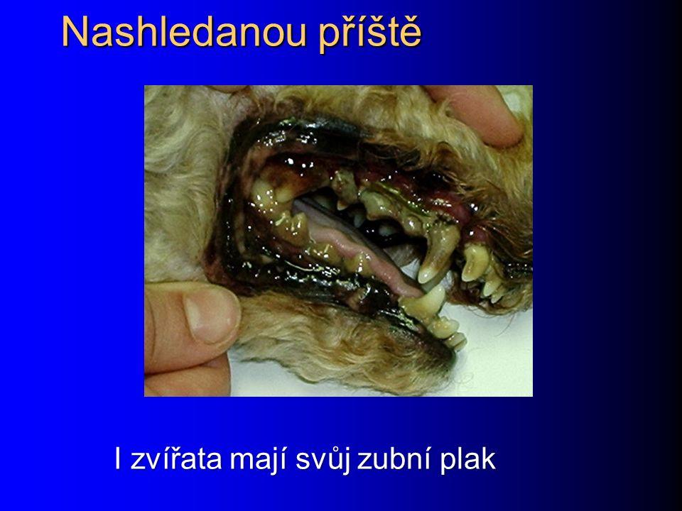 Nashledanou příště I zvířata mají svůj zubní plak