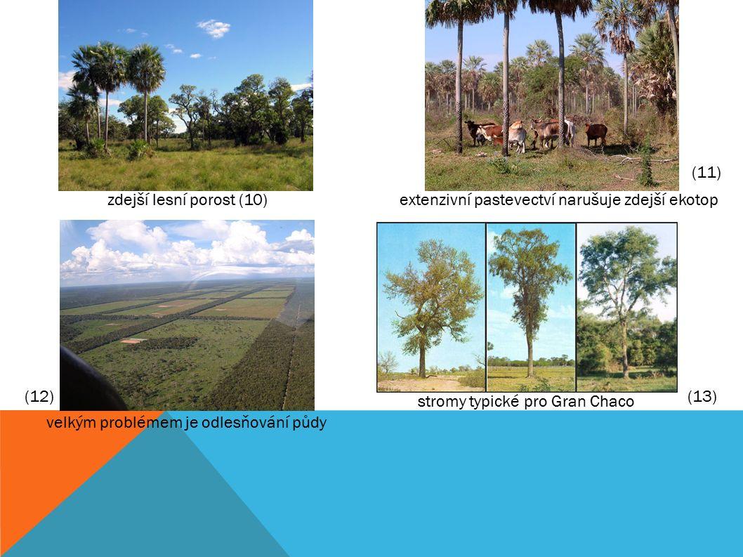 zdejší lesní porost (10)extenzivní pastevectví narušuje zdejší ekotop velkým problémem je odlesňování půdy stromy typické pro Gran Chaco (11) (12)(13)
