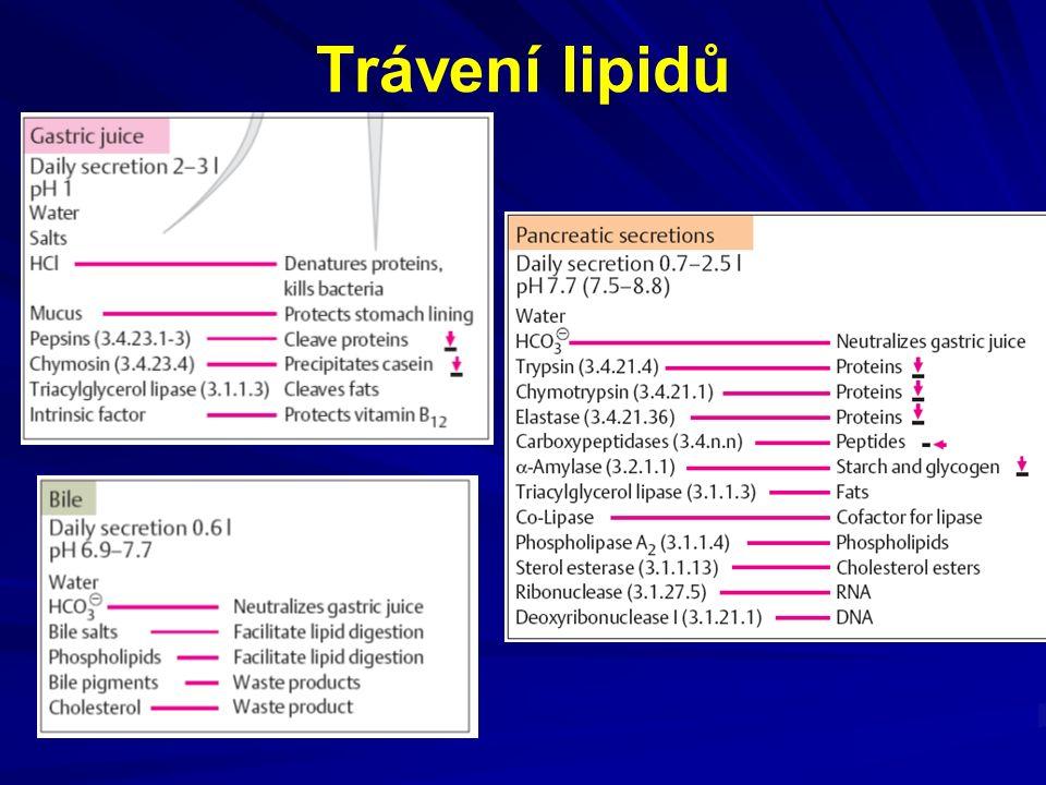 Trávení lipidů