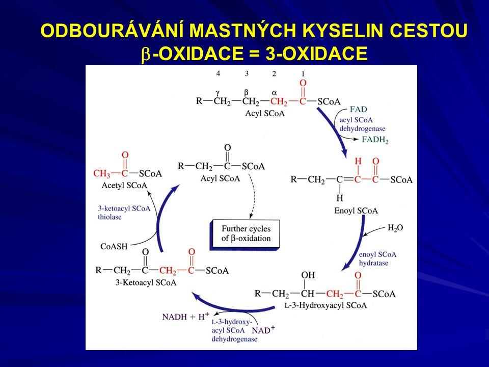ODBOURÁVÁNÍ MASTNÝCH KYSELIN CESTOU  -OXIDACE = 3-OXIDACE