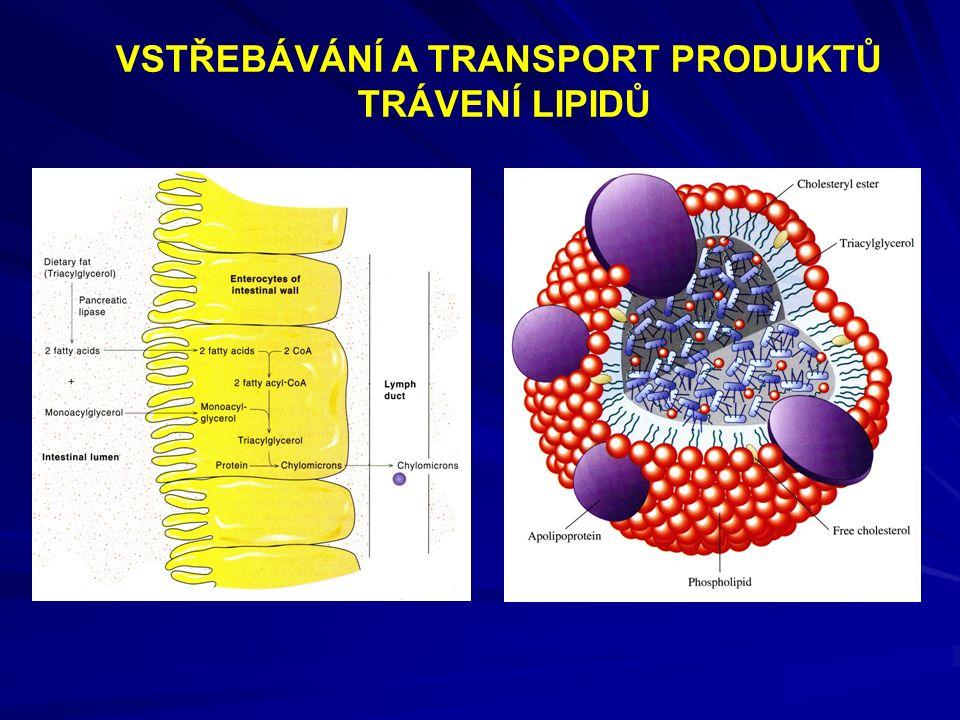 Chylomikrony lipoproteiny s nejmenší hustotou (lipidová složka-triacylglyceroly 98-99 %)  v podstatě tukové kapénky s tenkou vrstvou proteinů a polárních lipidů na povrchu sestavovány jsou v tenkém střevě z lipidů přijatých potravou, poté absorbovány do lymfy a krevního řečiště a transportovány do periferních tkání tam lipoproteinlipáza odštěpí mastné kyseliny z triacylglycerolů  zbytek chylomikronu obsahuje hlavně cholesterol