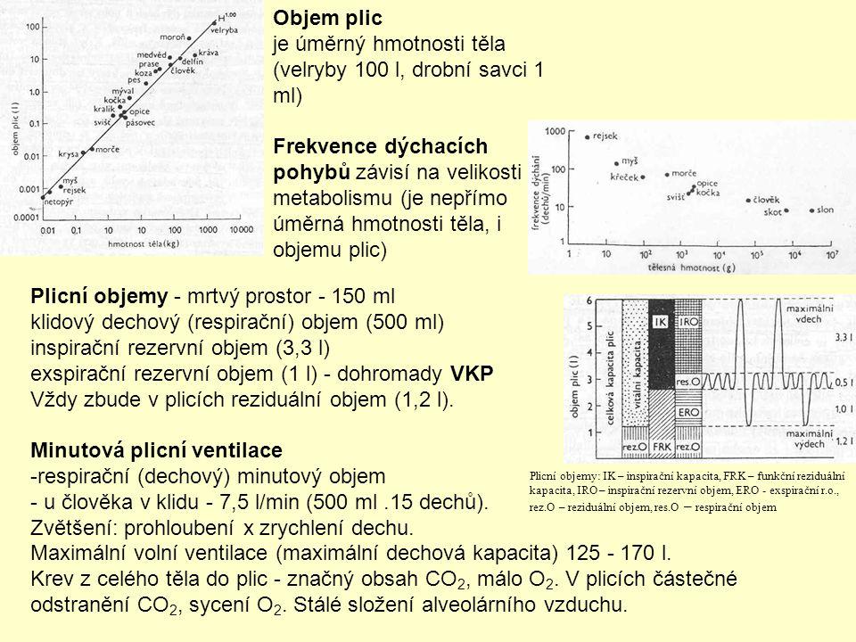 Objem plic je úměrný hmotnosti těla (velryby 100 l, drobní savci 1 ml) Frekvence dýchacích pohybů závisí na velikosti metabolismu (je nepřímo úměrná hmotnosti těla, i objemu plic) Plicní objemy - mrtvý prostor - 150 ml klidový dechový (respirační) objem (500 ml) inspirační rezervní objem (3,3 l) exspirační rezervní objem (1 l) - dohromady VKP Vždy zbude v plicích reziduální objem (1,2 l).