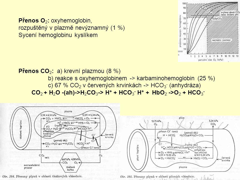 Přenos O 2 : oxyhemoglobin, rozpuštěný v plazmě nevýznamný (1 %) Sycení hemoglobinu kyslíkem Přenos CO 2 : a) krevní plazmou (8 %) b) reakce s oxyhemoglobinem -> karbaminohemoglobin (25 %) c) 67 % CO 2 v červených krvinkách -> HCO 3 - (anhydráza) CO 2 + H 2 O -(ah)->H 2 CO 3 -> H + + HCO 3 - H + + HbO 2 ->O 2 + HCO 3 -