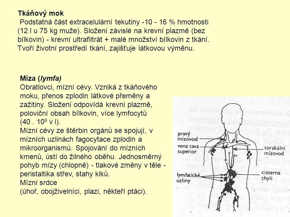 Tkáňový mok Podstatná část extracelulární tekutiny -10 - 16 % hmotnosti (12 l u 75 kg muže).