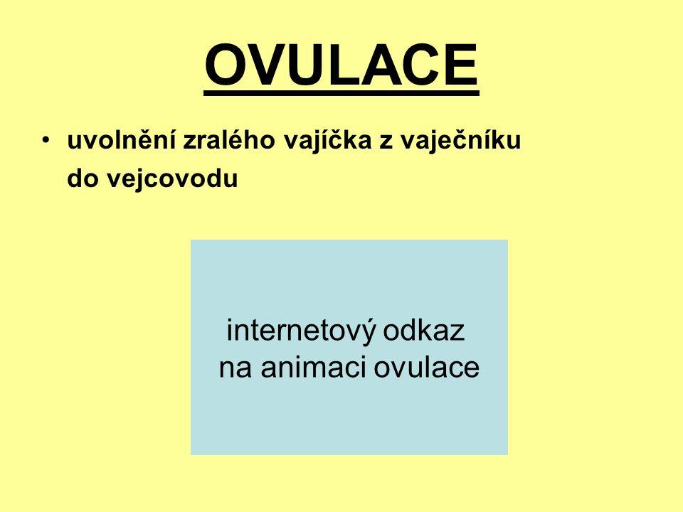 OVULACE uvolnění zralého vajíčka z vaječníku do vejcovodu internetový odkaz na animaci ovulace