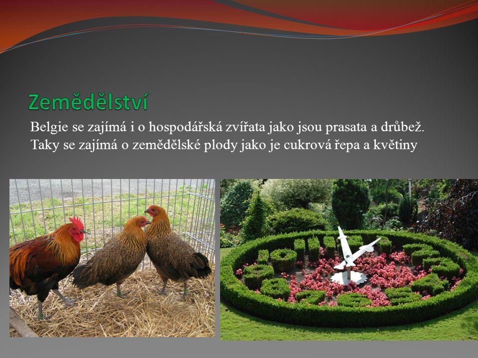 Belgie se zajímá i o hospodářská zvířata jako jsou prasata a drůbež. Taky se zajímá o zemědělské plody jako je cukrová řepa a květiny