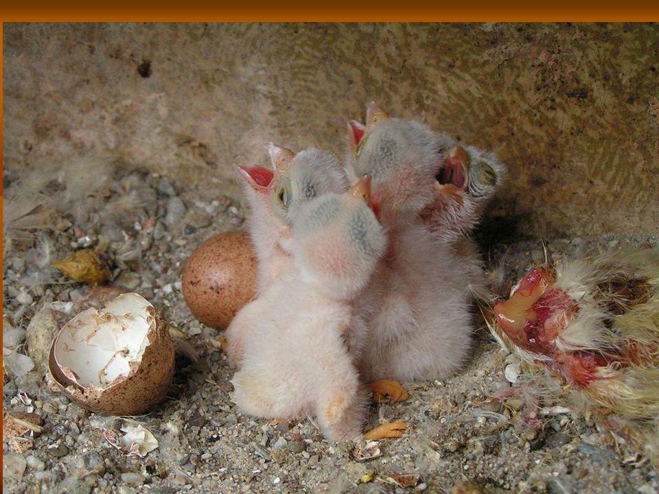 Od vajíčka k mláděti Program je možné absolvovat volitelně v areálu CEV v Bartošovicích nebo v učebně školy.