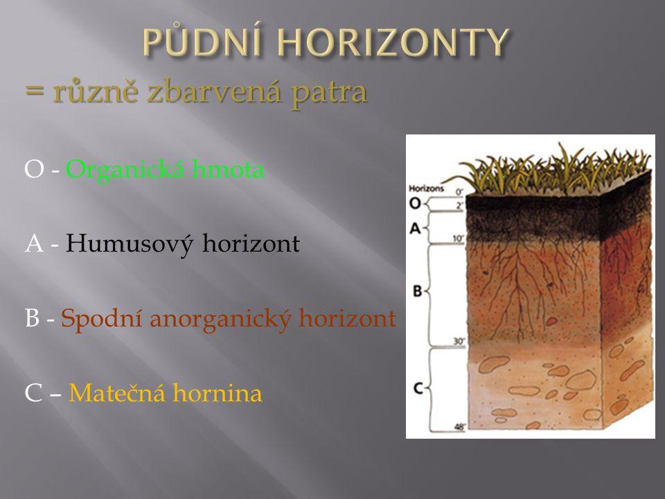 = různě zbarvená patra O - Organická hmota A - Humusový horizont B - Spodní anorganický horizont C – Matečná hornina
