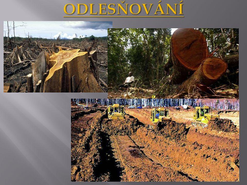 http://www.differentlife.cz/ekologie02.ht m http://upload.wikimedia.org/wikipedia/commons/d/d8/Oxisol.jpg