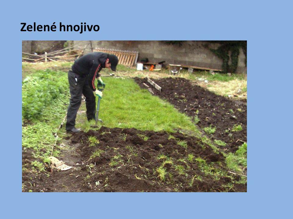 Dusíkatá hnojiva - podporují tvorbu listové hmoty